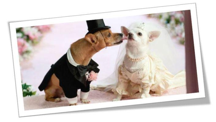 honden-trouwen