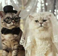 katten trouwen 02