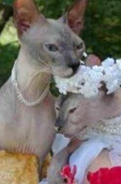 katten trouwen 07